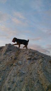 ChaBlis går tur i sandtaket med belønningen sin.